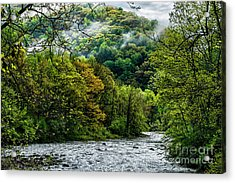 Williams River Spring Acrylic Print by Thomas R Fletcher