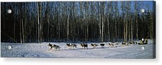 18 Huskies Begin The Long Haul Of 1049 Acrylic Print by Panoramic Images