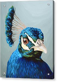 Peacock Acrylic Print by Lesley Alexander