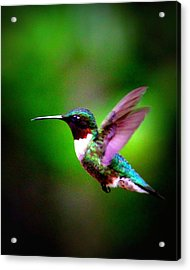 1846-007 - Ruby-throated Hummingbird Acrylic Print