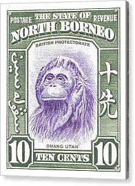 1939 North Borneo Orangutan Stamp Acrylic Print