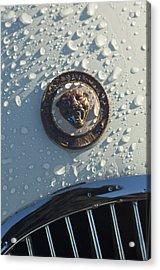 1954 Jaguar Xk120 Roadster Hood Emblem Acrylic Print by Jill Reger