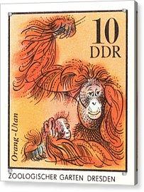 1975 East Germany Zoo Orangutan Postage Stamp Acrylic Print