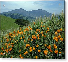 1a6493 Mt. Diablo And Poppies Acrylic Print