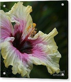 Aloha Aloalo Tropical Hibiscus Haiku Maui Hawaii Acrylic Print by Sharon Mau