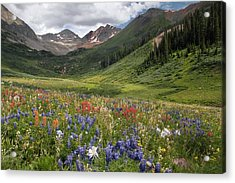 Alpine Flowers In Rustler's Gulch, Usa Acrylic Print by Bob Gibbons