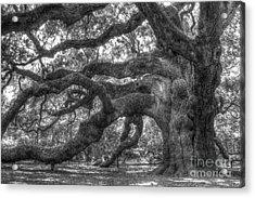 Angel Oak Tree Charleston Sc Acrylic Print