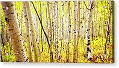 Aspen Grove II Acrylic Print