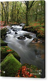 Autumn At Golitha Falls Acrylic Print by Carl Whitfield