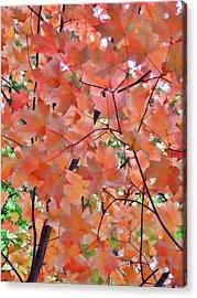Autumn Foliage 1 Acrylic Print