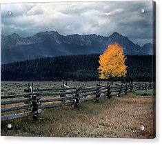 Autumn Light Acrylic Print by Leland D Howard