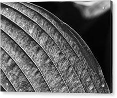 Back Lit Leaf Acrylic Print by Robert Ullmann
