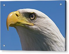 Acrylic Print featuring the photograph Bald Eagle by JT Lewis