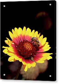Bee On Flower Acrylic Print by Michael Riley