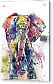 Big Colorful Elephant Acrylic Print