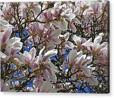 Acrylic Print featuring the photograph Blossom Magnolia White Spring Flowers Photography by Artecco Fine Art Photography