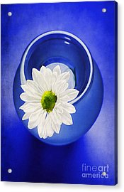 Blue Acrylic Print by Darren Fisher
