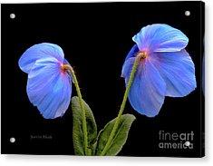 Blue Poppies Acrylic Print by Jeannie Rhode
