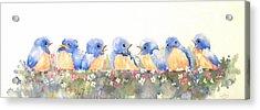 Bluebird Friends Acrylic Print