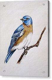 Bluebird Guardian Acrylic Print by Kathrine McMurray