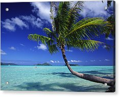 Bora Bora, Palm Tree Acrylic Print by Ron Dahlquist - Printscapes