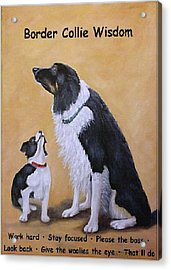 Border Collie Wisdom Acrylic Print