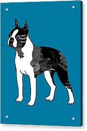 Boston Terrier Collection Acrylic Print