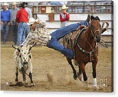 Bull Doggin Acrylic Print by Dennis Hammer