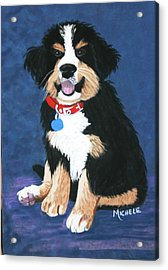 Burmese Mountain Pup Acrylic Print by Michele Turney