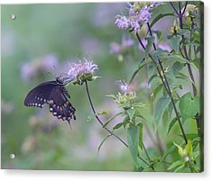 Butterfly Acrylic Print by June Marie Sobrito