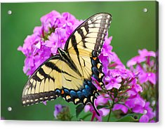 Acrylic Print featuring the photograph Butterfly  by Kathy Gibbons