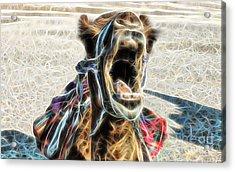 Camel Collection Acrylic Print