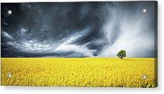 Canola Field Acrylic Print by Bess Hamiti