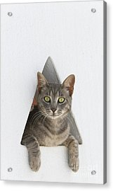Cat In A Wall Acrylic Print by Jean-Louis Klein and Marie-Luce Hubert