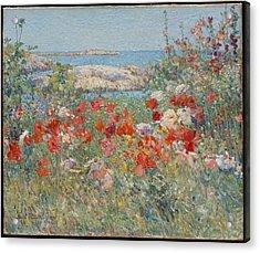 Celia Thaxter's Garden Acrylic Print by  Childe Hassam