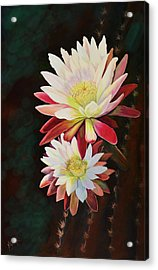 Acrylic Print featuring the painting Cereus Business by Marilyn Smith