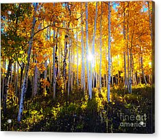 Acrylic Print featuring the photograph Colorado Autumn by Kate Avery