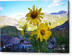Acrylic Print featuring the photograph Colorado Wildflowers by Kate Avery