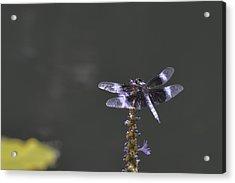 Dragon Fly Acrylic Print by Linda Geiger