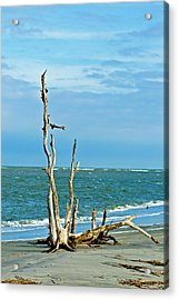 Driftwood On Beach Acrylic Print by Bill Barber