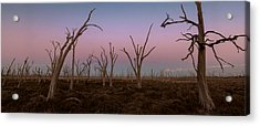 Dusk At Dumbleyung Lake Acrylic Print