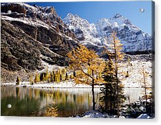 September Dusting Acrylic Print by Frank Townsley