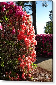 Easter Colors Acrylic Print