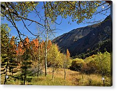 Fall In Bishop Creek  Acrylic Print by Dung Ma