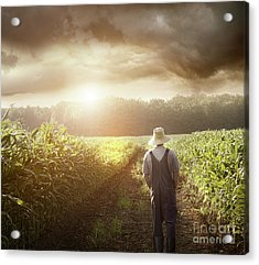 Farmer Walking In Corn Fields At Sunset Acrylic Print