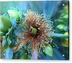 Flower Acrylic Print by Maxim Tzinman