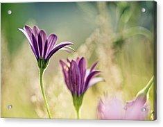 Flower On Summer Meadow Acrylic Print by Nailia Schwarz