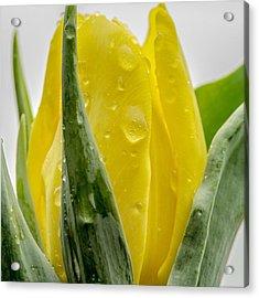 #flowers #flower #petal #petals #nature Acrylic Print