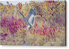 Fly Fly Away Acrylic Print by Judy Kay