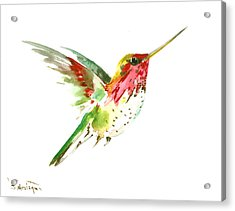 Flying Hummingbird Acrylic Print by Suren Nersisyan